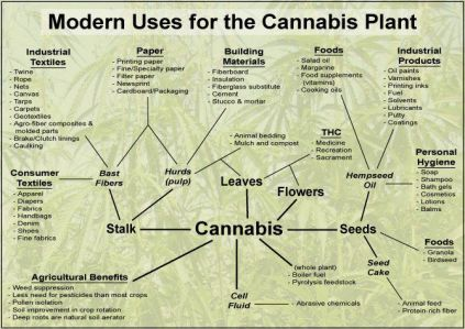 Modern Uses From Cannabis Plant