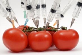 alimentos-transgenicos-1