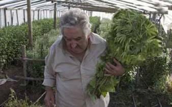 mujica_marihuana_autocultivo
